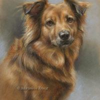 'Tess', 30x40 cm, pastel hondenportret (verkocht/opdracht)