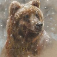 'Snowy bear', 24x28 cm, pastel € 580 incl. lijst