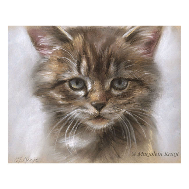 'Kitten', 22x17 cm, portrait in pastel (for sale)