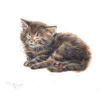 'Maine coon Kitten', 10x10 cm, Marjolein Kruijt (NTK)