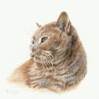 Miniatuur portret, britse korthaar kat, acryl, 10x10 cm, Marjolein Kruijt (verkocht)