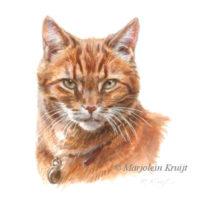 'Rode kat portret', 10x10 cm, Marjolein Kruijt (verkocht/opdracht)