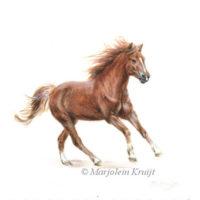 Miniatuur portret, galopperend paard, acryl, 10x10 cm, Marjolein Kruijt (verkocht)