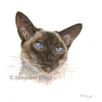 Miniatuur portret, siamees I, acryl, 10x10 cm, Marjolein Kruijt (verkocht)