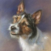 'Jack Russell terrier', 25x25 cm, pastel (verkocht/opdracht)