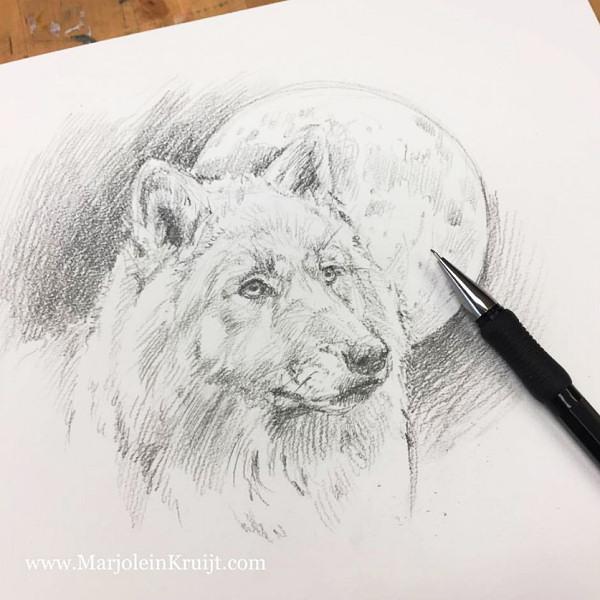 dieren schilderijen tekenen en ontwerpen. Schetsboek van Marjolein Kruijt (wolf bij volle maan)