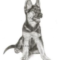 'Herdershond puppy', 24x30 cm, potlood (verkocht/opdracht)