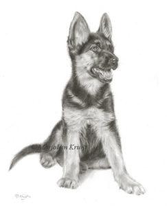 'Herdershond puppy', 24x30 cm, potlood tekening (verkocht/opdracht)