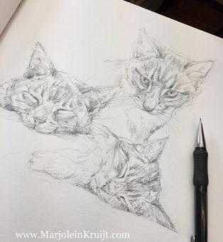 Bestel een portret schets van jouw huisdier - Marjolein Kruijt