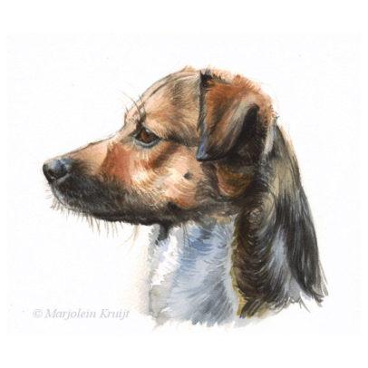 'Hond en profil', 20x17 cm, aquarel schilderij (te koop)