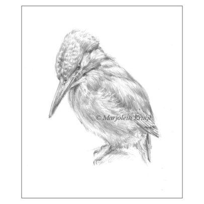 Ijsvogel tekening te koop (ontwerp portret schilderij) door Marjolein Kruijt