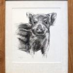 Wild zwijn tekening, Marjolein Kruijt (te koop)