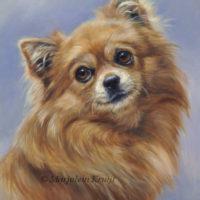 'Chihuahua', 24x18 cm, olieverf schilderij | portret (verkocht/opdracht)