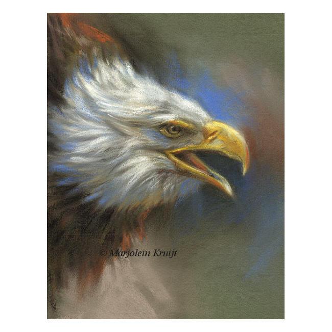 'Amerikaanse zeearend', pastel schilderij (te koop) €550 incl. lijst