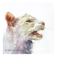 'Miauwende kat', 15x15 cm, aquarel (te koop)