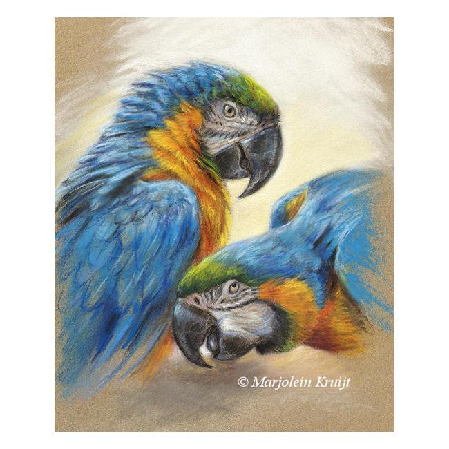 'Blauwgele ara's', pastel schilderij (te koop)