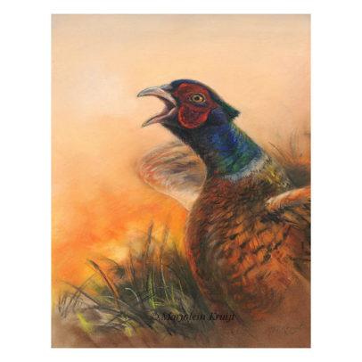 'Fazant', pastel schilderij (te koop)
