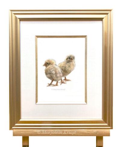 Kuikentjes in aquarel te koop incl. lijst