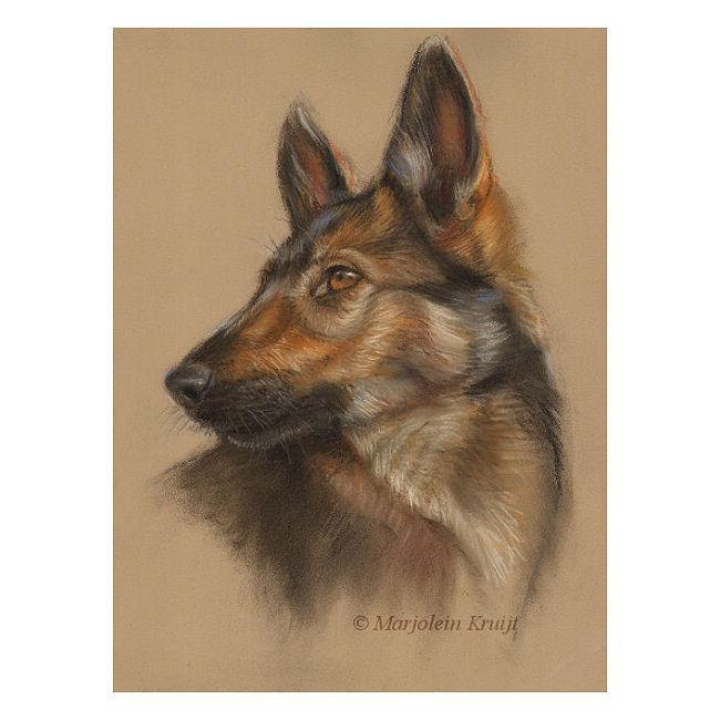 'Herder pup', ca. 25x35 cm, pastel, incl. lijst 38x48 cm €680