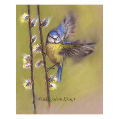 'Blue tit in spring', 28x23 cm, pastel painting (for sale)