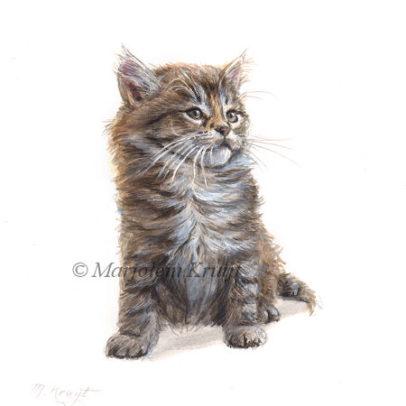 'Maine coon Kitten', schilderij 14x14 cm, Marjolein Kruijt (te koop)