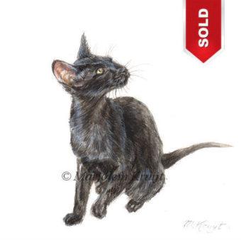 'Siamees', 10x10 cm, Marjolein Kruijt (verkocht)