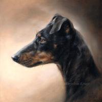 'Manchester terrier', olieverf 30x30 cm (verkocht/opdracht)