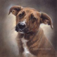 'Chavdar'-rescued dog, 30x30 cm, olieverf (opdracht/verkocht)