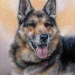 'Herdershond'-Igor, 40x30 cm, olieverf schilderij (verkocht/opdracht)