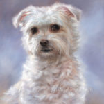 'Maltezer', olieverf portret 30x24 cm (verkocht/opdracht)