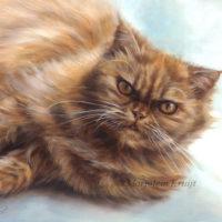 'Rode pers'- eefje, 24x30 cm, olieverf kattenschilderij (verkocht/opdracht)
