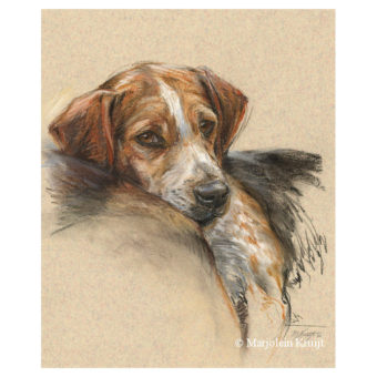 'Beagle', 40x30 cm, pastel portrait painting (for sale)