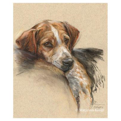 'Beagle', 40x30 cm, pastel schilderij (te koop)