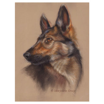 'Herder pup', 35x25 cm, pastel schilderij, €680 incl. lijst