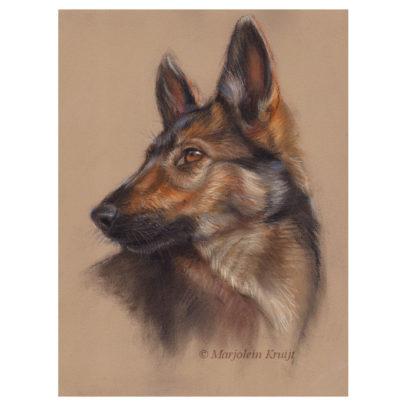 'Herder pup', 35x25 cm, pastel schilderij (te koop)