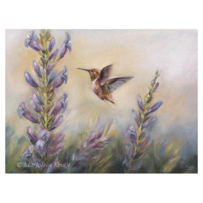 'Kolibri' (Selasphorus Rufus), 18x24 cm, olieverf schilderij (te koop)