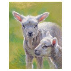 'Lammetjes', 26x20 cm, olieverf schilderij (te koop)