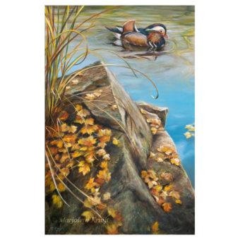 'Autumn colours' -mandarijneend, 60x40 cm, olieverf schilderij (te koop)
