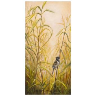 'Morning song'- Rietgors, 60x30 cm, olieverf schilderij (te koop)