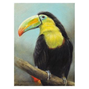 'Zwavelborsttoekan', 18x13 cm, olieverf schilderij (te koop)