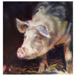 'Varken', 20x20 cm, olieverf schilderij,(te koop)