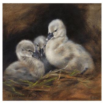 'Zwarte zwaantjes', 20x20 cm, olieverf schilderij € 950 incl. lijst