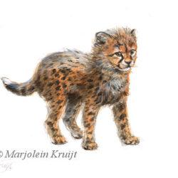 Jonge Cheetah illustratie