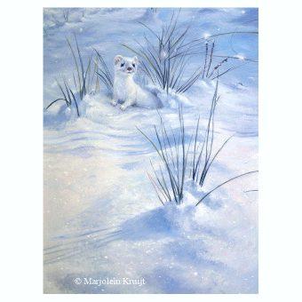 'Hermelijn', 30x22 cm, olieverf schilderij (te koop)