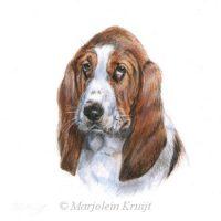 'Basset hound', 13x13 cm, miniatuur portret (verkocht/opdracht)