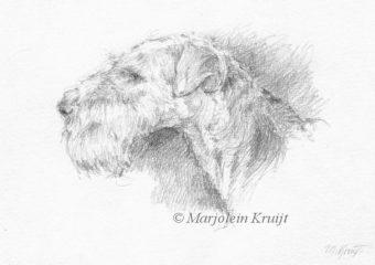 'Airdale terrier', 13x18 cm potlood tekening. Inclusief lijst 23x31 cm (te koop)