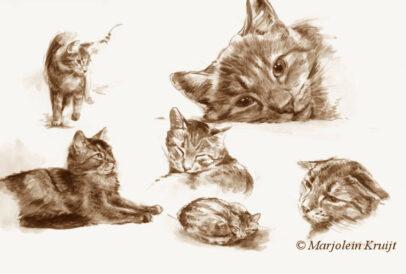 'Katten', 22x32 cm, sepia aquarel schilderij (te koop)