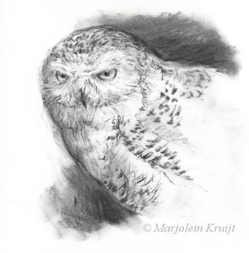 sneeuwuil uilen tekening schilderijen te koop