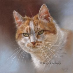 'Katten portret - Dikkie dik', 25x25 cm, pastel (opdracht/verkocht)
