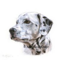 'Dalmatier', miniatuur portret, 10x10 cm(verkocht)